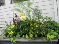 お店の前にある花壇